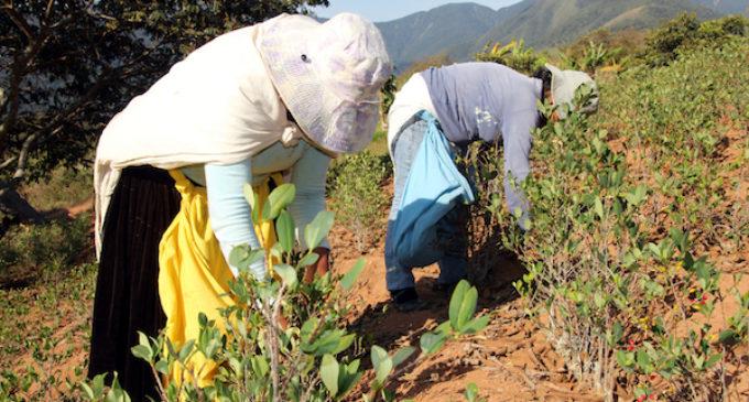 Proponen reducir sueldo y derechos a trabajadores agrícolas