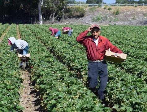 Los inmigrantes en general, y los latinos en particular, representan una pieza clave de la economía local