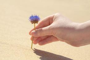 Una flor plantada en el desierto.