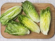 Lechuga romana (romaine lettuce)