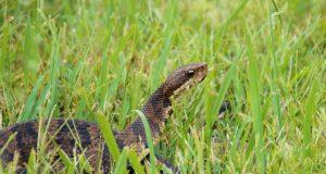 Cómo prevenir encuentros con serpientes