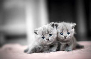 Adopte gatitos sin pagar tarifas en refugio de Mecklenburg