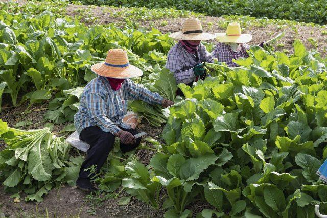 Avanza ley que busca legalizar a trabajadores agrícolas