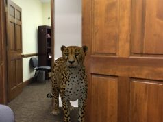 Google's 3D animals