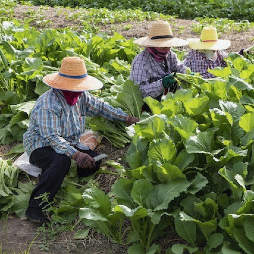 Es necesario incluir a los inmigrantes el los planes de ayuda por el Covid-19