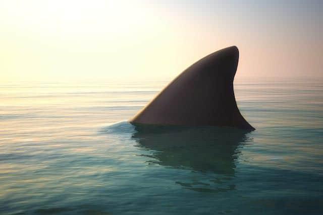 Tiburón muerde a adolescente en las costas de Carolina del Norte
