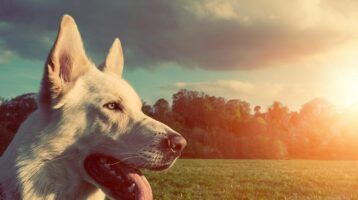 consejos-para-que-las-mascotas-tengan-un-verano-saludable
